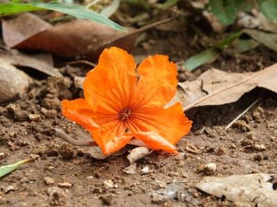 Erde-Blume